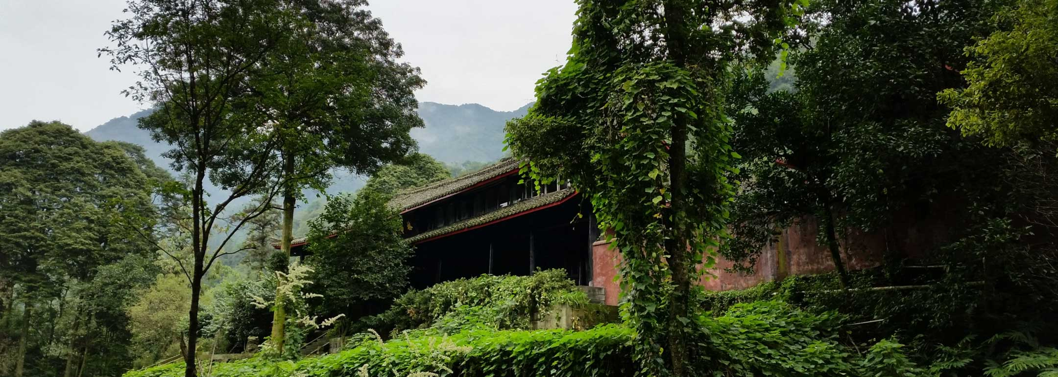 Harmony and Internal Cultivation at Emei Mountain Temple